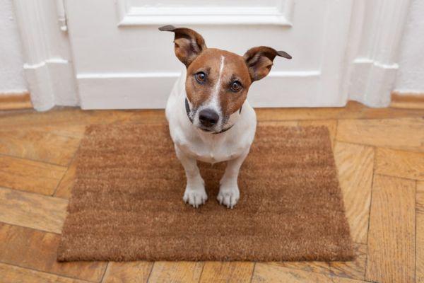 pet houseproof