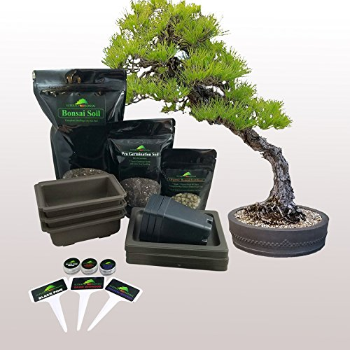 Planters Choice Bonsai Starter Kit The Complete Kit Thatsweetgift